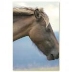 C 目をつぶる馬